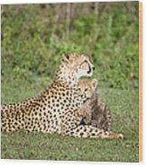 Cheetah Cub Acinonyx Jubatus Playing Wood Print