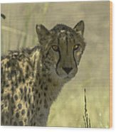Cheetah Gaze Wood Print