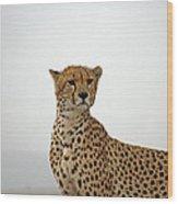 Cheetah In Serengeti. Wood Print