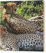 Cheetah - Masai Mara - Kenya Wood Print