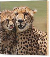 Cheetah Mother And Cub In Masai Mara Wood Print