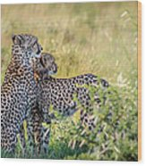 Cheetah Mother And Son Wood Print