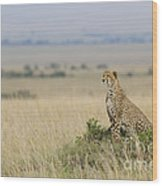 Cheetah Perched On A Mound Wood Print