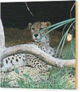 Cheetah Resting  Wood Print
