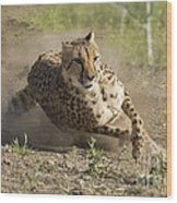 Cheetah Run 2 Wood Print