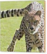 cheetah Running Portrait Wood Print