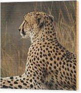 Cheetah South Africa Wood Print