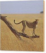 Cheetah Standing On Dead Tree Wood Print