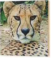 Cheetah Stare L Wood Print