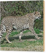 Cheetah Strolling Wood Print