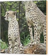 Cheetah's 02 Wood Print