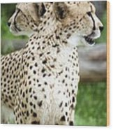 Cheetah's 04 Wood Print