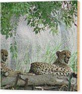 Cheetahs-120 Wood Print