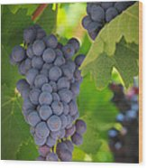 Chelan Blue Grapes Wood Print