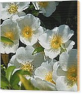 Cherokee Rose 2011 Wood Print