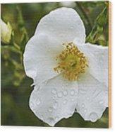 Cherokee Rose With Rain Drops Wood Print