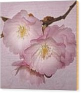 Cherrie Blossom Wood Print