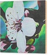 Cherry Blosom Wood Print