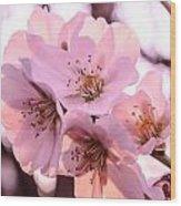 Cherry Blosom. Wood Print