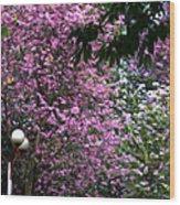 Cherry Blossom 3 Wood Print