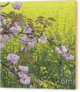 Cherry Blossom And Rapeseed Wood Print