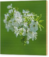 Cherry Blossom Featured 3 Wood Print
