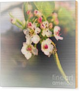 Cherry Blossom Flowers Wood Print