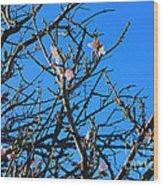 Cherry Blossom II Wood Print
