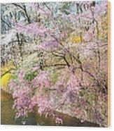 Cherry Blossom Land Wood Print