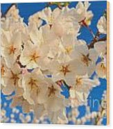 Cherry Blossom Macro Wood Print