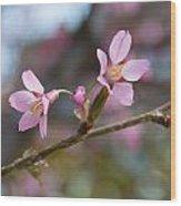 Cherry Blossom Pair Wood Print