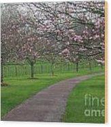 Cherry Blossom Path Wood Print