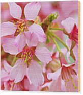 Cherry Blossom Special II Wood Print