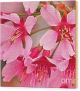 Cherry Blossom Special Wood Print