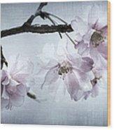 Cherry Blossom Sweetness Wood Print
