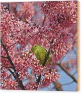 Cherry Blossom Time Wood Print