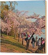 Cherry Blossoms 2013 - 007 Wood Print