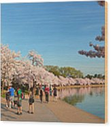 Cherry Blossoms 2013 - 020 Wood Print