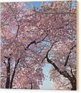 Cherry Blossoms 2013 - 025 Wood Print