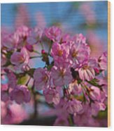Cherry Blossoms 2013 - 031 Wood Print