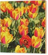 Cherry Blossoms 2013 - 032 Wood Print