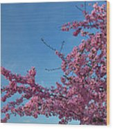 Cherry Blossoms 2013 - 037 Wood Print