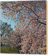 Cherry Blossoms 2013 - 038 Wood Print