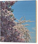 Cherry Blossoms 2013 - 046 Wood Print