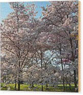 Cherry Blossoms 2013 - 049 Wood Print by Metro DC Photography