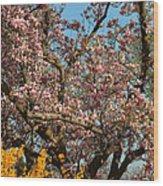 Cherry Blossoms 2013 - 051 Wood Print