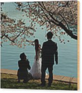 Cherry Blossoms 2013 - 054 Wood Print