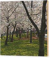 Cherry Blossoms 2013 - 057 Wood Print