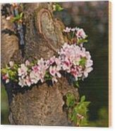 Cherry Blossoms 2013 - 064 Wood Print