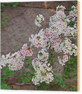 Cherry Blossoms 2013 - 067 Wood Print
